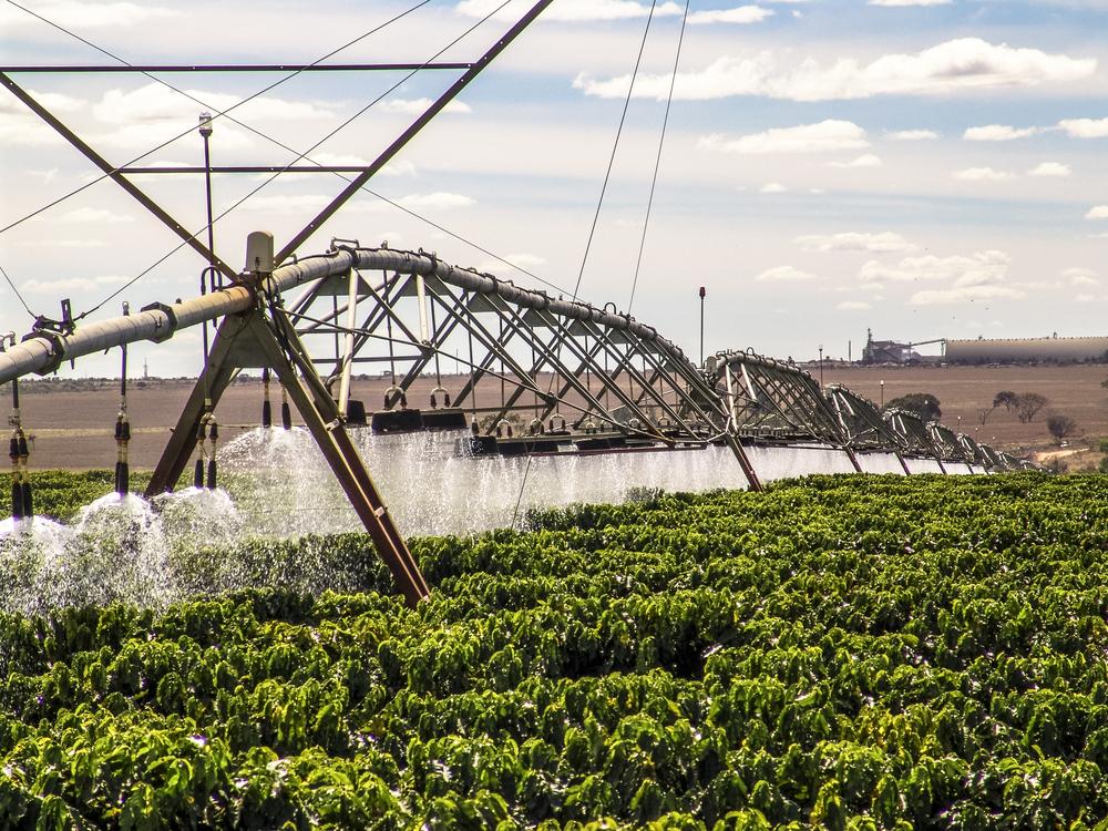A cafeicultura está entre os setores que mais consomem água na produção. (Fonte: Shutterstock)