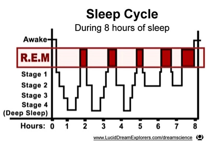 The 5 Sleep Phases: How They Affect Our Sleep 2