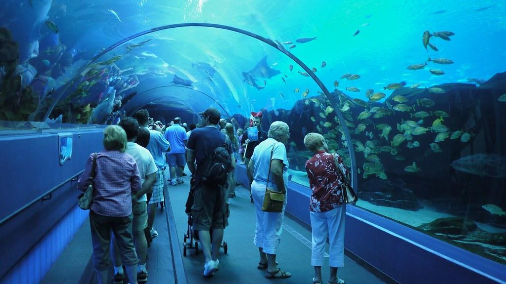 Georgia Aquarium Acrylic Tunnel | David | Flickr