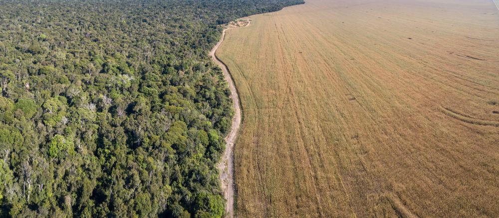 98% das áreas utilizadas para a expansão da soja no bioma amazônico na última década já estavam abertas. (Fonte: Shutterstock/PARALAXIS/Reprodução)