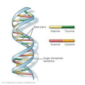 Double helix - DNA illustration