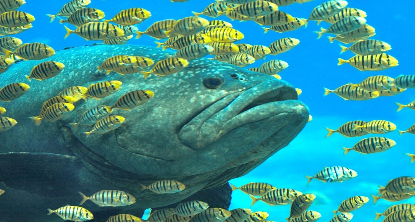 grouper4.jpg