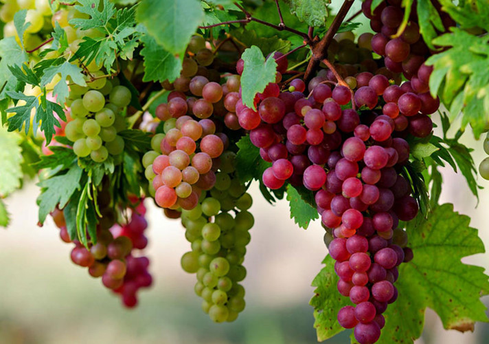 loại hoa quả