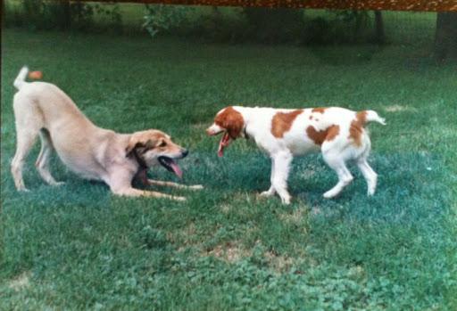 Down Dog Pet Services & Training - Pet Behavior & Care