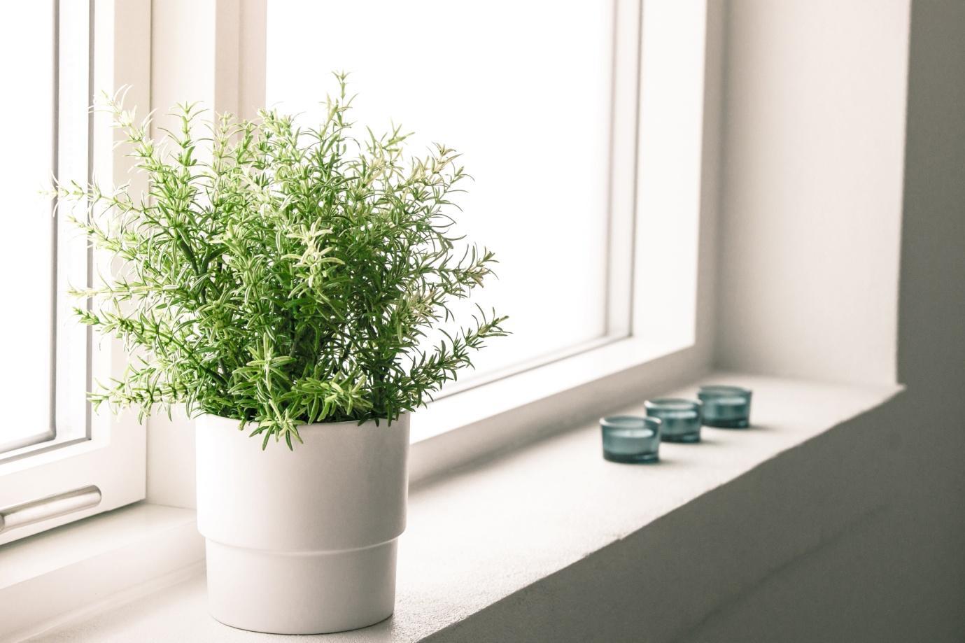 C:\Users\bilal\Downloads\13888610_indoor-plant-in-a-bathroom-window.jpg