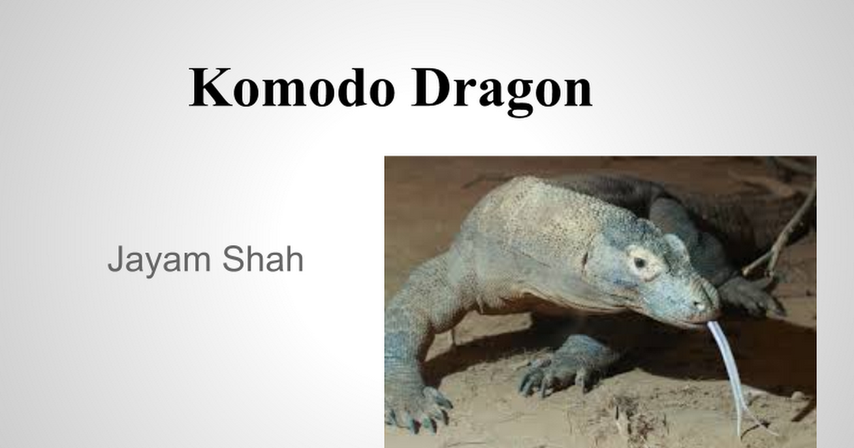 Komodo Dragon Presentation Google Slides