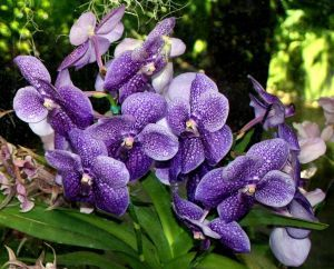 Orchideen Ratgeber