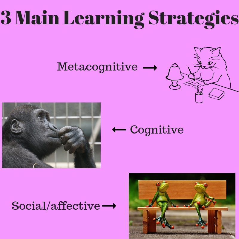 3 Main Learning Strategies Infographic