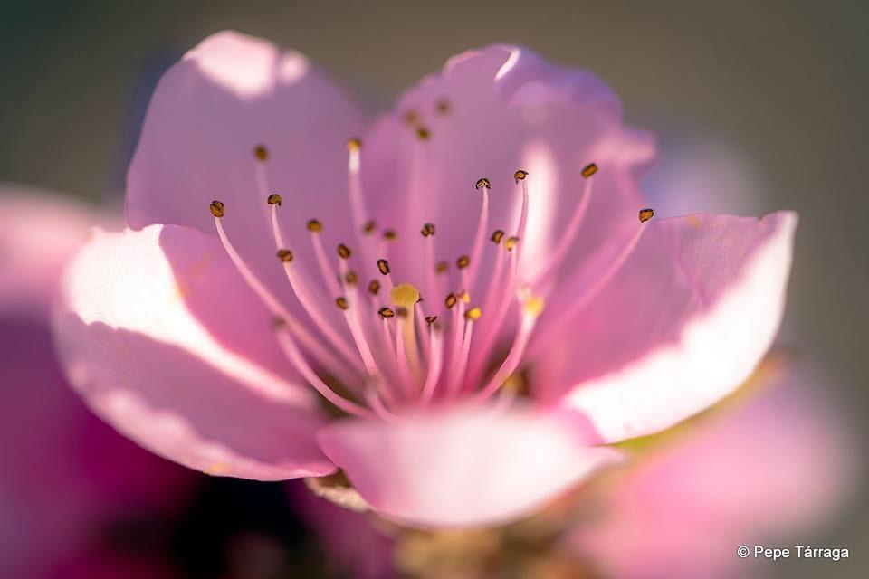 La imagen puede contener: planta, flor, naturaleza y exterior