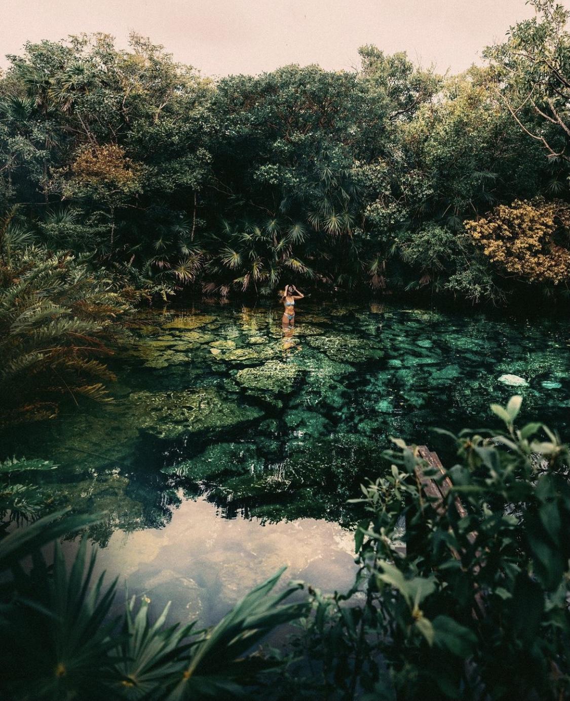 ¿Qué plantas cuelgan del techo de los Cenotes?