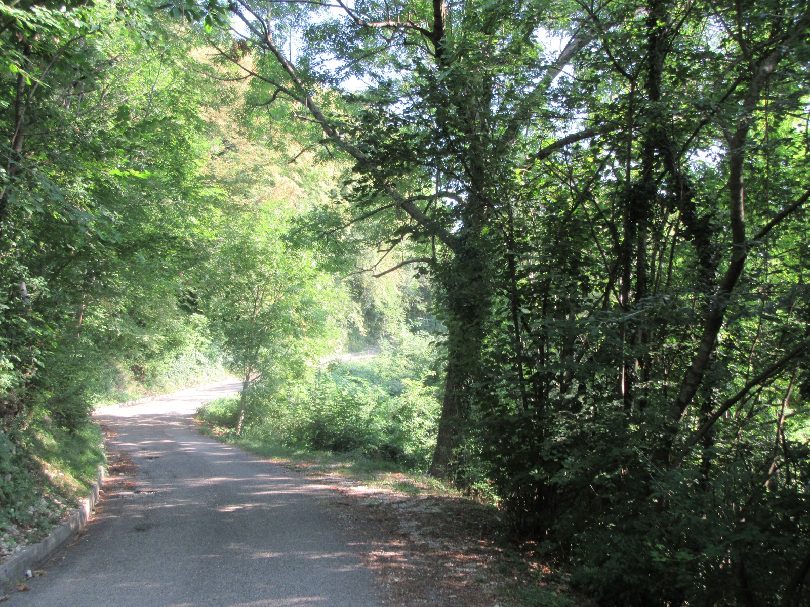 Bike climb of Monte Grappa from Possagno  - roadway surrounded by trees