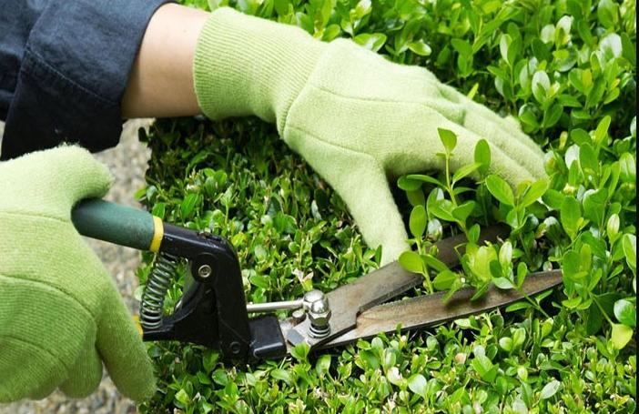 Nếu yêu cây và có thời gian thì tự chăm sóc không cây xanh là hoàn toàn có thể