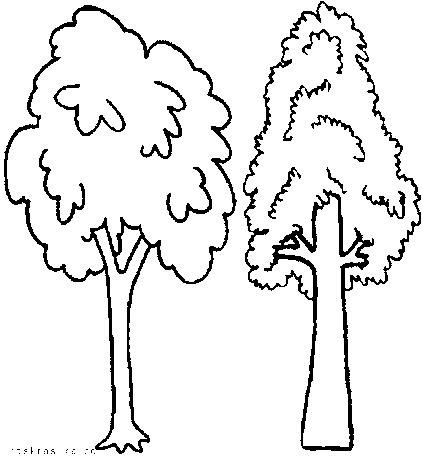Раскраски о растениях. Деревья картинки