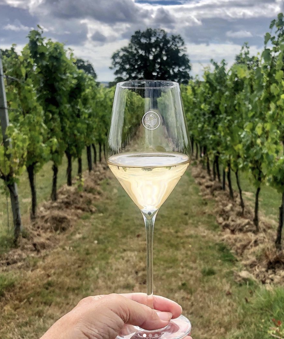 Suzanne Jones | Holding up a glass of white wine in a vineyard