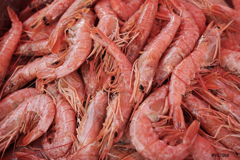 seafood shrimp