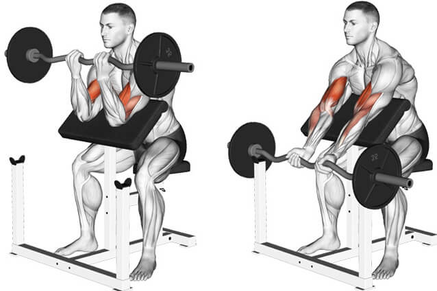 Best Arm Exercises: The Barbell Preacher Curl Exercise