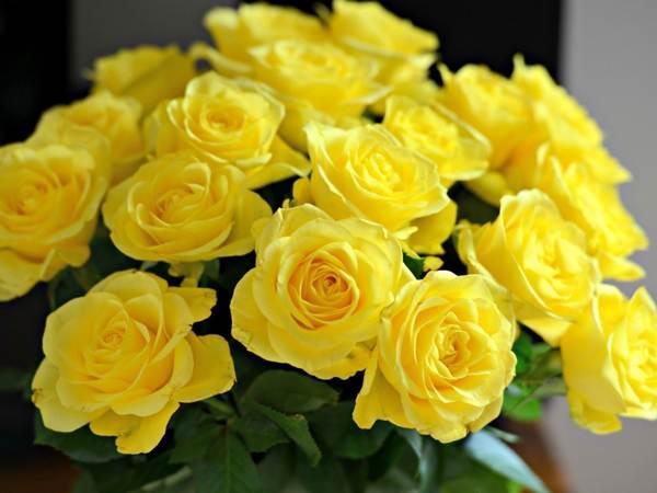 Сколько роз можно подарить подруге, чтобы букет не восприняли как знак любви