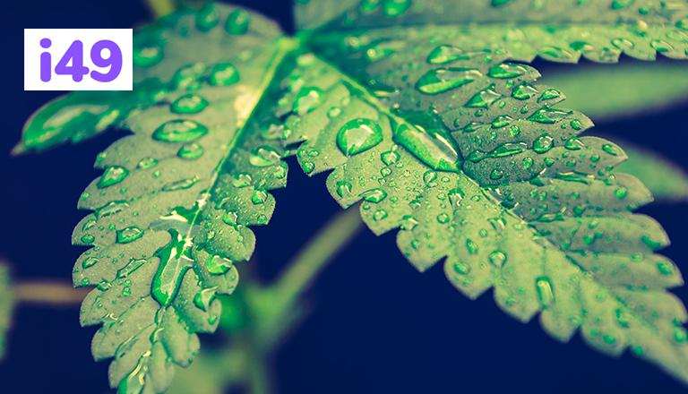 proper-way-to-water-your-cannabis-plants