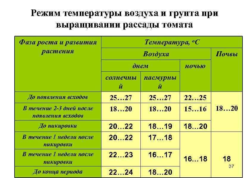 Температурные режимы при выращивании рассады томата