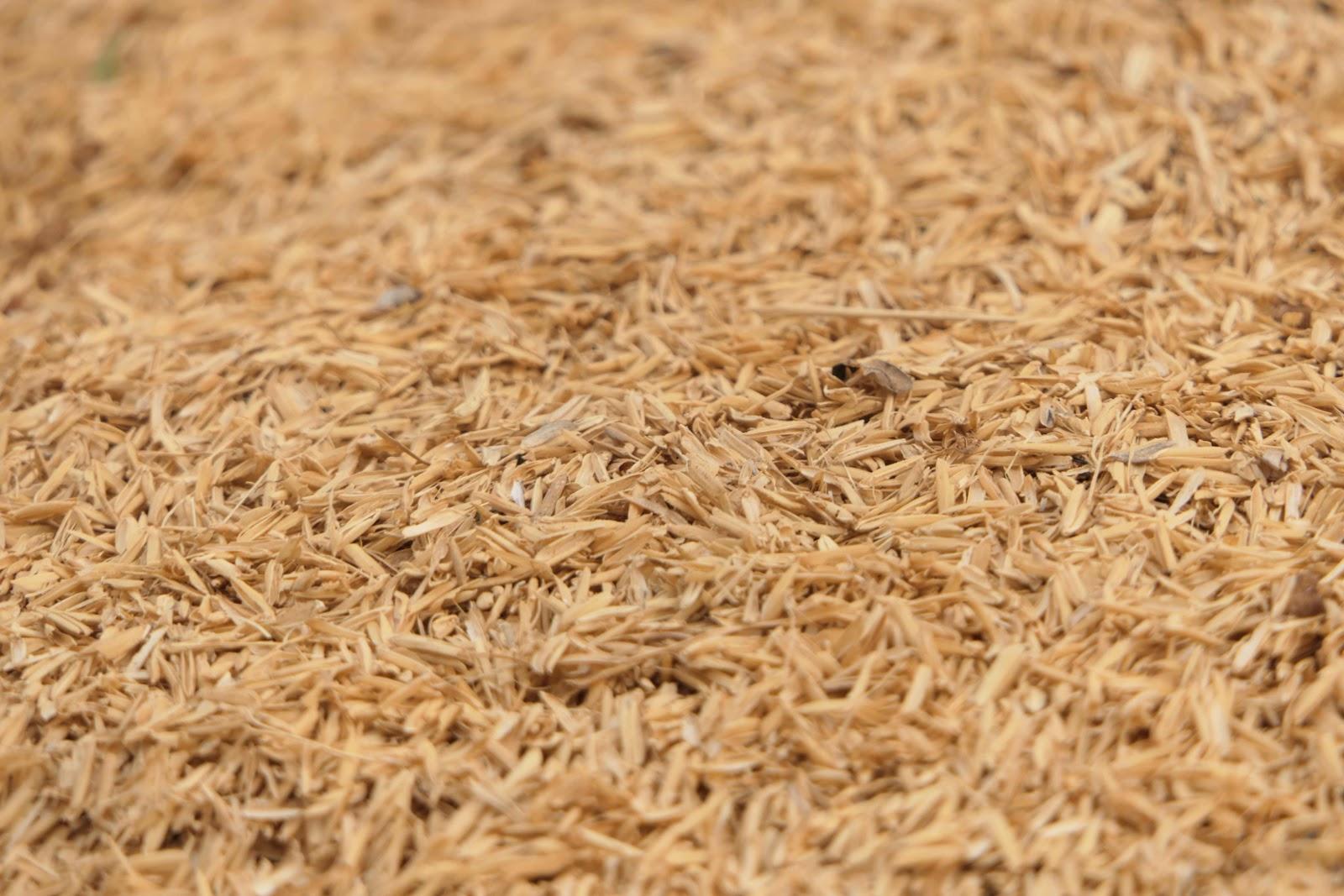 Low-Carb Grains