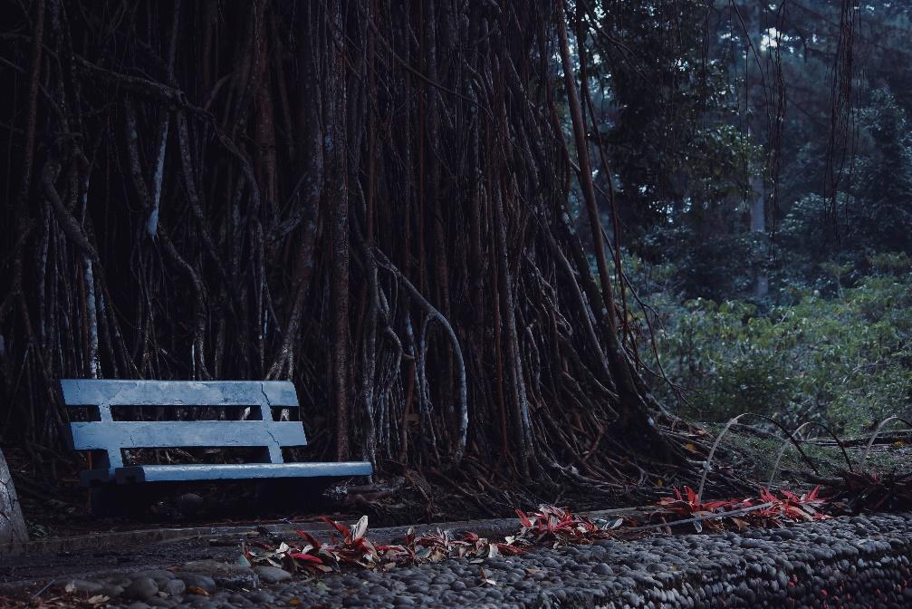 Bogor botanical garden view